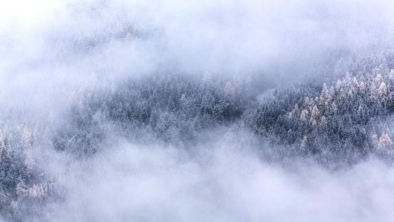 Туман окутывает кроны заснеженных деревьев