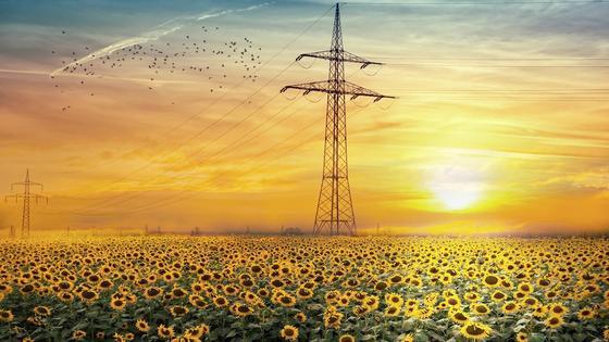 солнце светит над полем подсолнухов