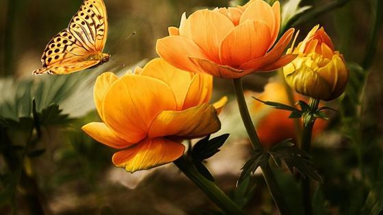 Большие желтые цветы, на которые садится бабочка