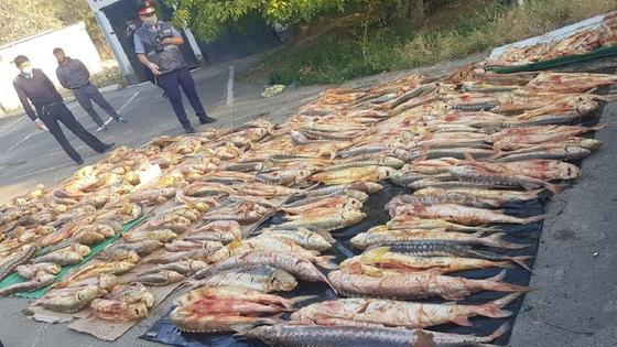 Изъятая рыба в Атырау