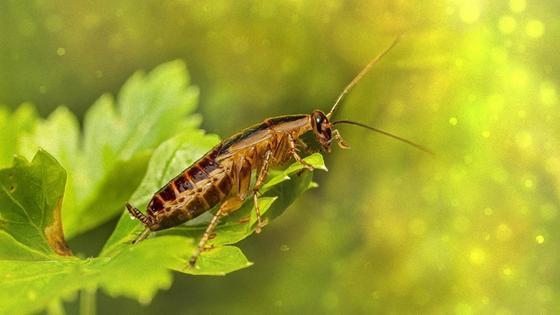 таракан на зеленом листе