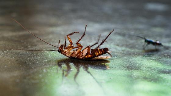 Таракан лежит на полу