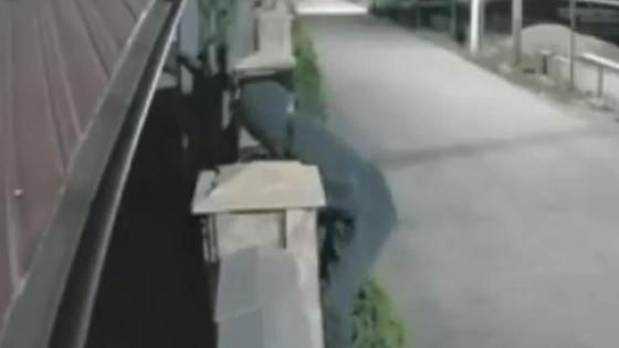 Парень забрался на забор