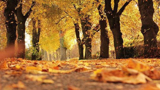 Оранжевые и желтые листья падают на землю