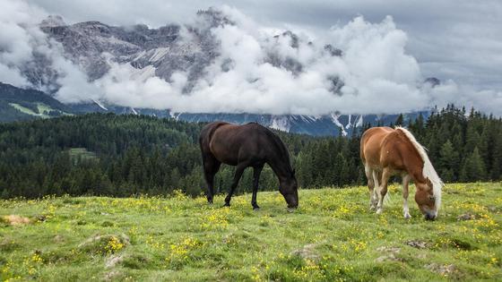 кони пасутся на лугу