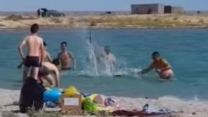 Били тюленя палками в Актау: участников скандального видео не накажут